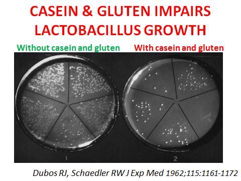 Forskning Kasein och gluten utarmar tarmfloran