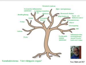 Professor Tore Midtvedts pedagogiska microbiotaträd